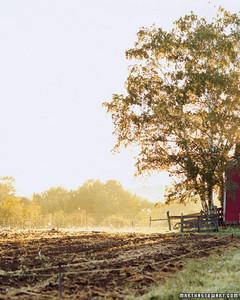 mb0607_farm9.jpg