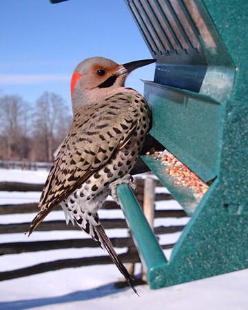 4092_020609_bird.jpg