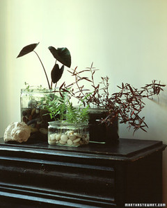 Indoor water gardens martha stewart - Indoor water plants list ...