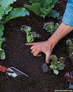 ft077_planting13.jpg