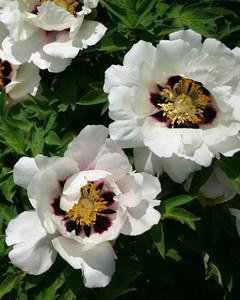5113_031510_lotus.jpg