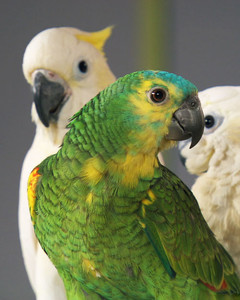 pk_4002_bird_tips.jpg