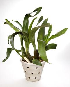 4109_030609_orchid.jpg
