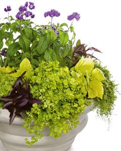 4141_041709_plants.jpg