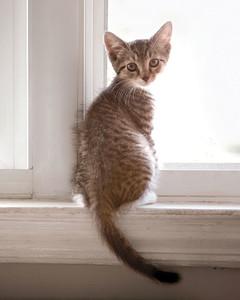 kitty-0511ms107236.jpg