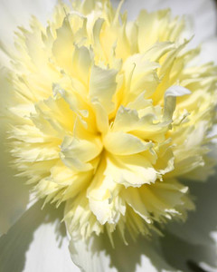 5113_031510_anemone.jpg