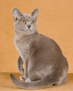 cat-breeds-ib25-210.jpg
