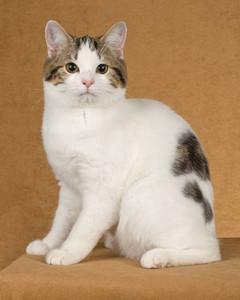 cat-breeds-jf09-315.jpg