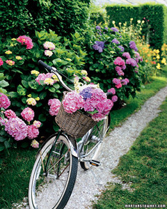 mla102550_0807_bike.jpg