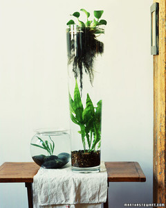 Indoor Water Gardens Martha Stewart