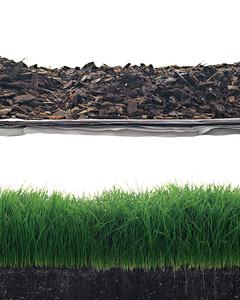 mld103100_0308_grass.jpg