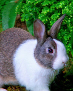 041711_bunny_glossary.jpg