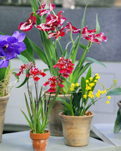 6128_040111_orchids_2.jpg