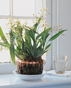 mla102782_1108_orchid.jpg