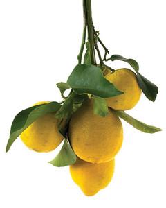 mld103986_0708_lemons.jpg