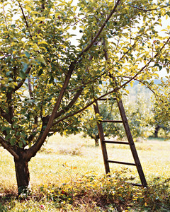 orchard05-a103601-1014.jpg