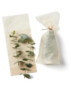 eucalyptus-239-md109396.jpg