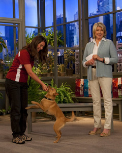 5146_051810_dog_training.jpg