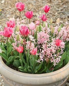 6048_111710_pink_flowers.jpg