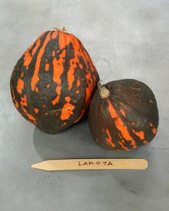 lakota-pumpkin-mslb7021.jpg