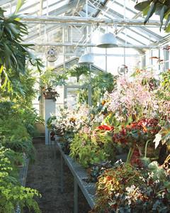gardening-orchids-1-mld107179.jpg