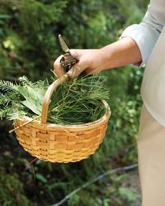 foliage-foraging-0811mld106417b.jpg