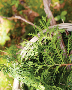 foliage-foraging-0811mld106417c.jpg