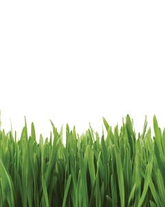 grass-0811ms107525-istock_3156488.jpg