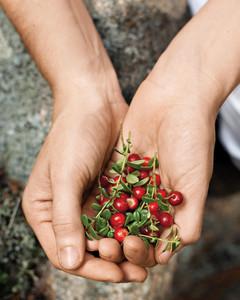 cranberries-foraging-0811mld106417.jpg