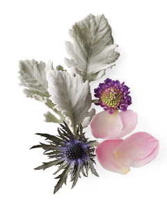 silve-lavender-pink-plants-mld108315.jpg