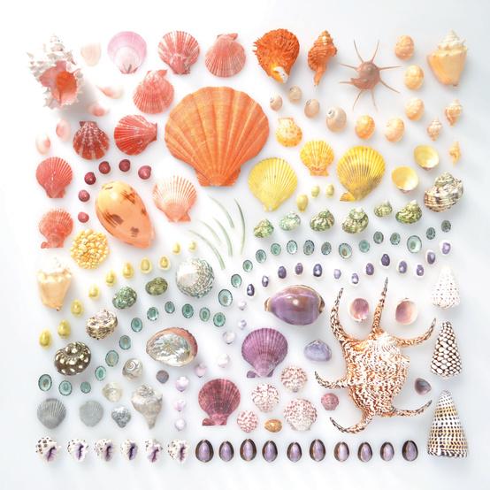 rainbow-colored-seashells