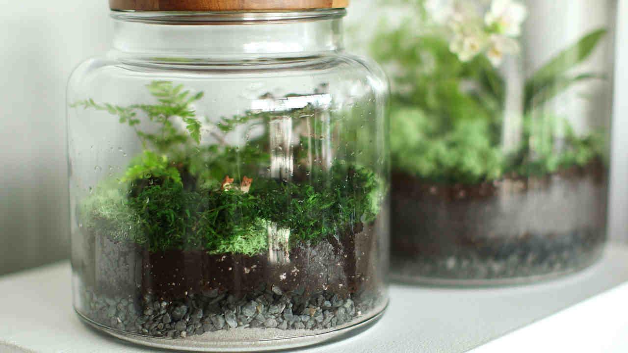 How To Make The Perfect Terrarium And Keep It Alive Martha Stewart