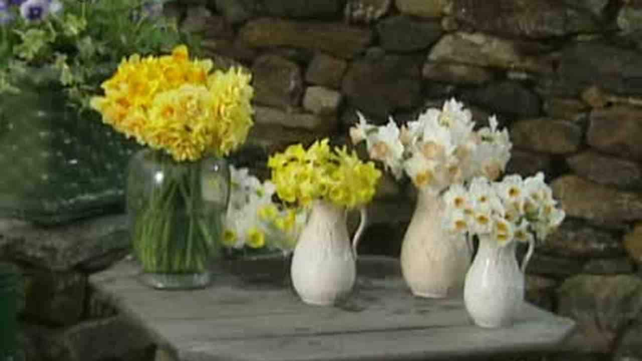 video how to arrange spring daffodils martha stewart