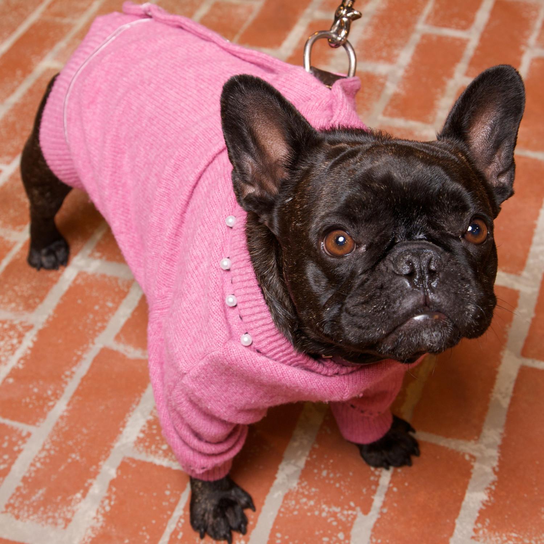 Wool Cardigan Dog Coat Amp Video Martha Stewart