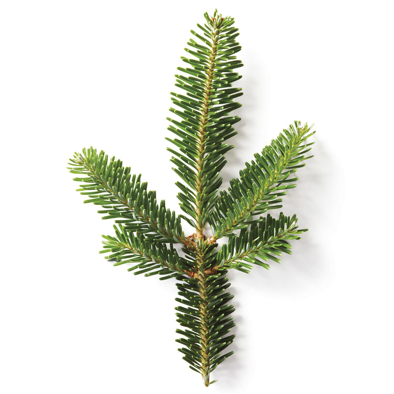 a christmas tree glossary - Christmas Tree Decoration