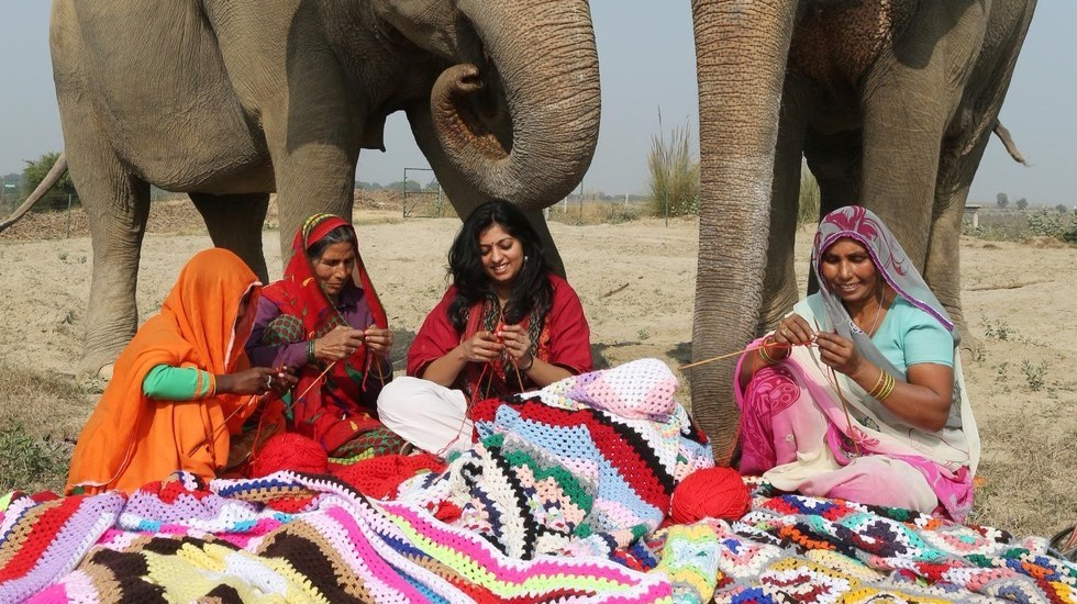 Knitting Jumpers For Elephants Fake : You can help knit giant sweaters for rescued elephants