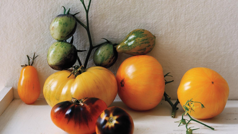 tomato-glossary-47-md109341.jpg