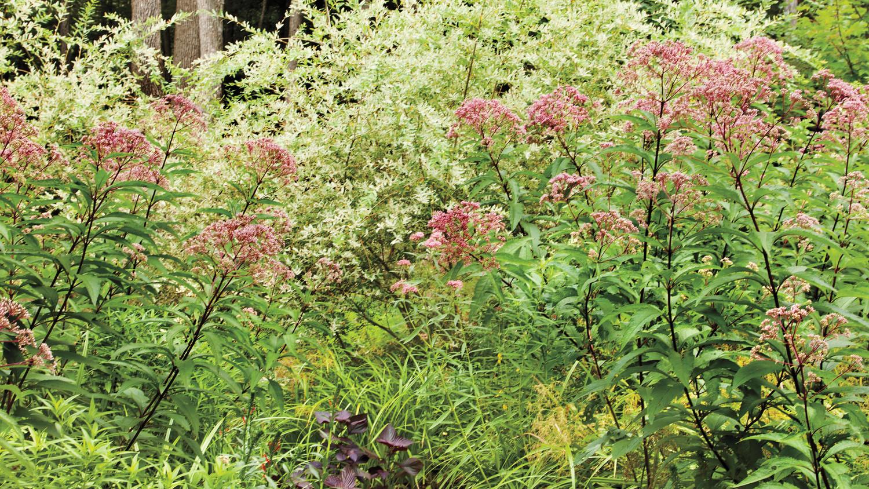 summer-rohdie-garden-0475-md109241.jpg