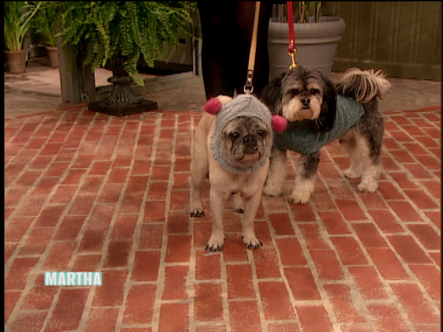 Video: How to Make an Upcycled Dog Sweater Martha Stewart