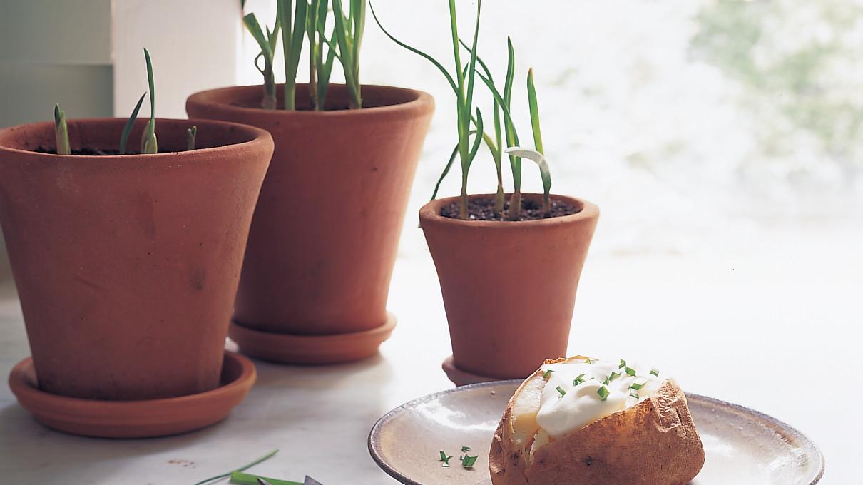 how to grow garlic indoors martha stewart. Black Bedroom Furniture Sets. Home Design Ideas