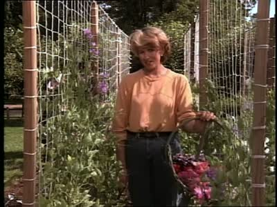 Video How To Build A Trellis For Sweet Peas Martha Stewart