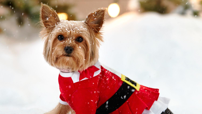 2--petsmart-small-dog-in-snow-0988-d112475_vs_r2a.jpg