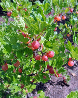 Harvesting Berries and Travels to the Mediterranean: The Latest from Martha's Blog