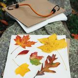 la_1107_leaves.jpg