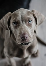 dog-pixabay-0317.jpg (skyword:410189)