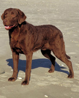 Sporting Dog Breeds
