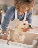 Pet Grooming Tips