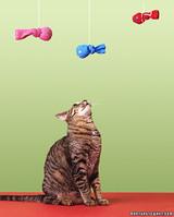 ka100418_hol03_cat.jpg