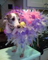 pets_contest_82306.jpg