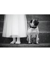 Wedding Pet Contest